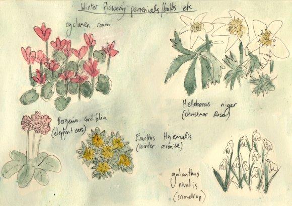 winter flowering