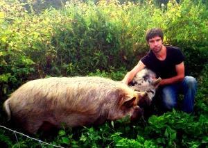 adam pigs bentham